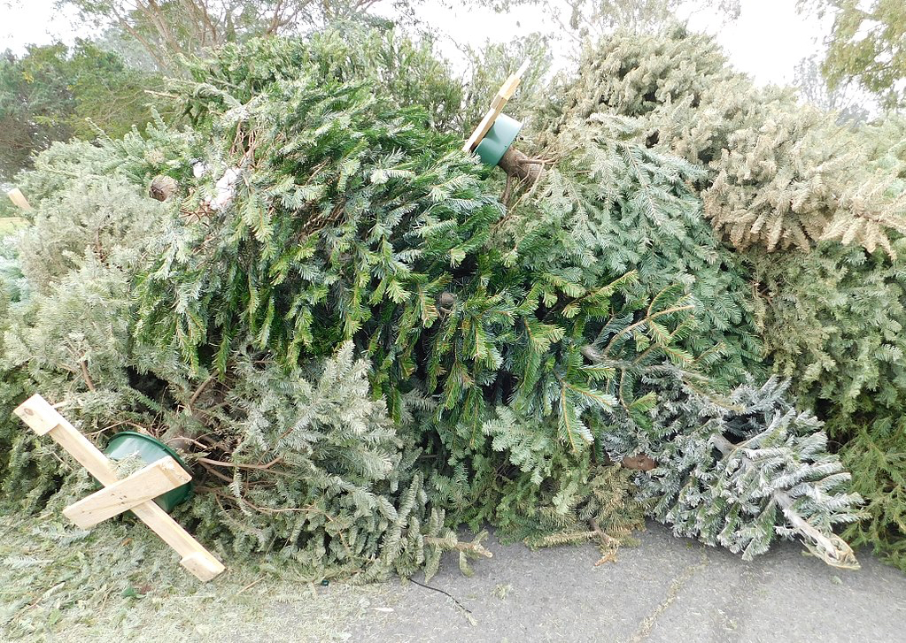 Holiday trees accepted beginning Dec. 31