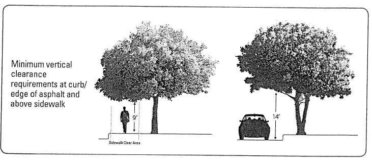 Trim trees in City Right-of-Way