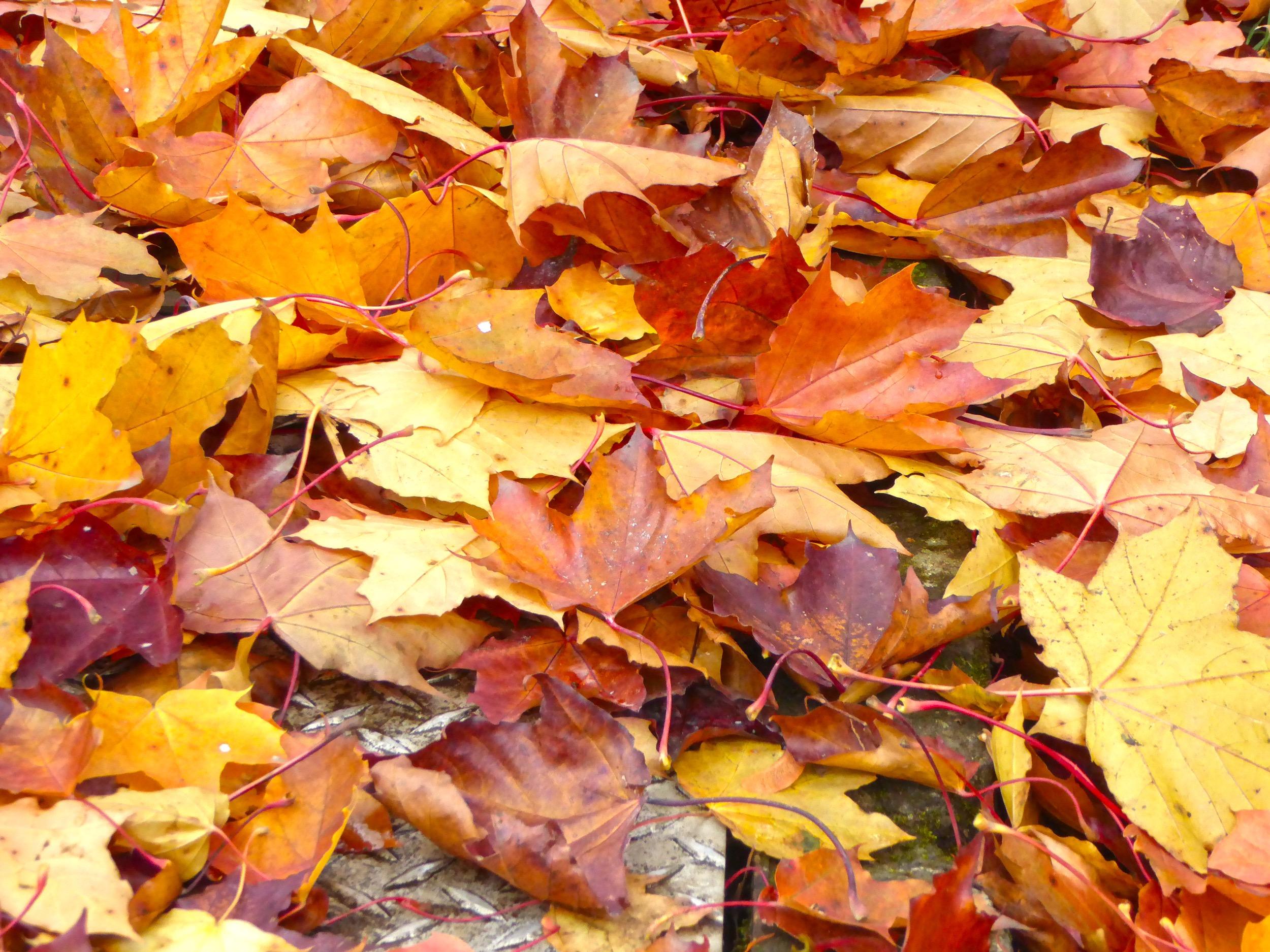Fall Leaf Reminders